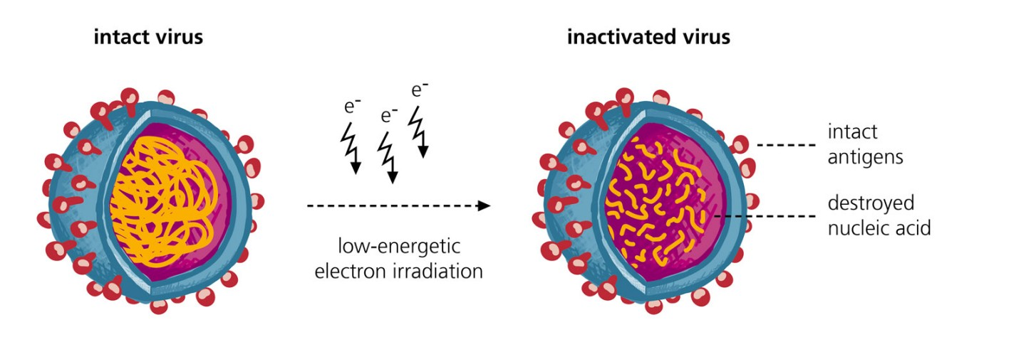 Viral inactivation by means of electron irradiation.