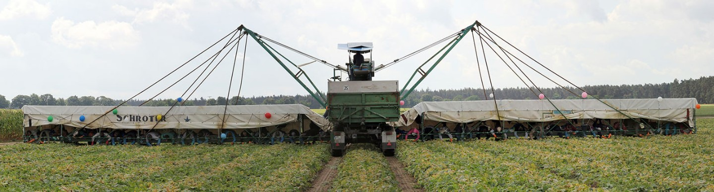 "Agricultural vehicles known as ""cucumber flyers"" enable as many as 50 seasonal workers to"